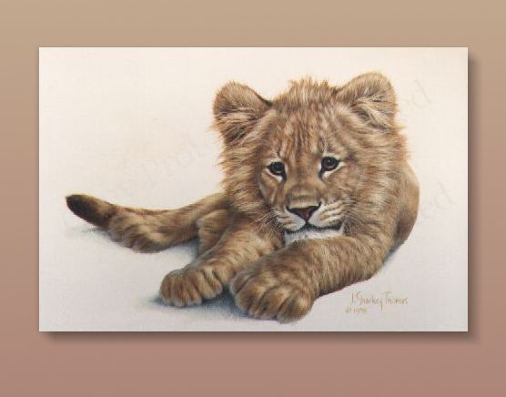 Young Lion - Acrylic on Board, 10 in. x 16 in
